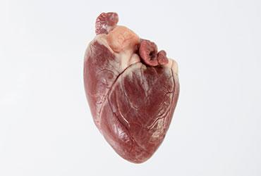 Corazón de cordero