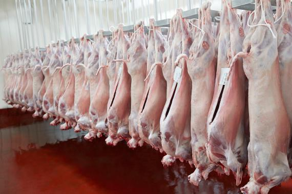 Carne de ovino